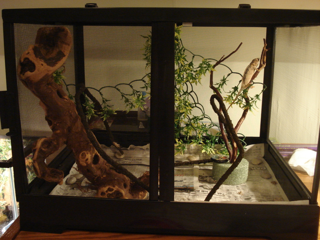 un exemple de terrarium mal agencé